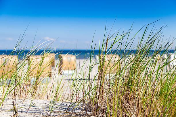 Dune mit reed – Foto