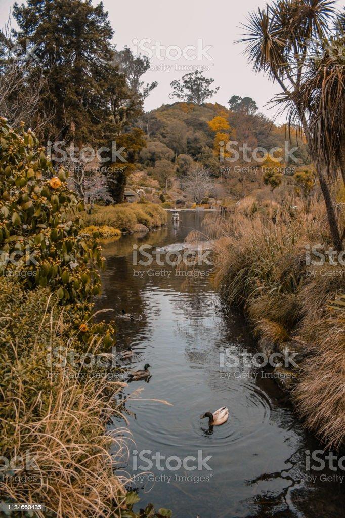 Dunedin Botanic Garden, Zuid eiland, Nieuw-Zeeland foto