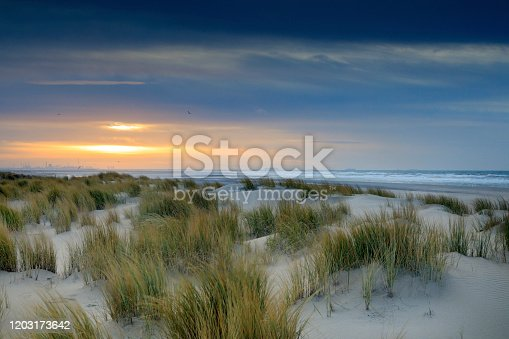 dunes along the Dutch coast near The Hague  just before sunset; Kijkduin, Netherlands