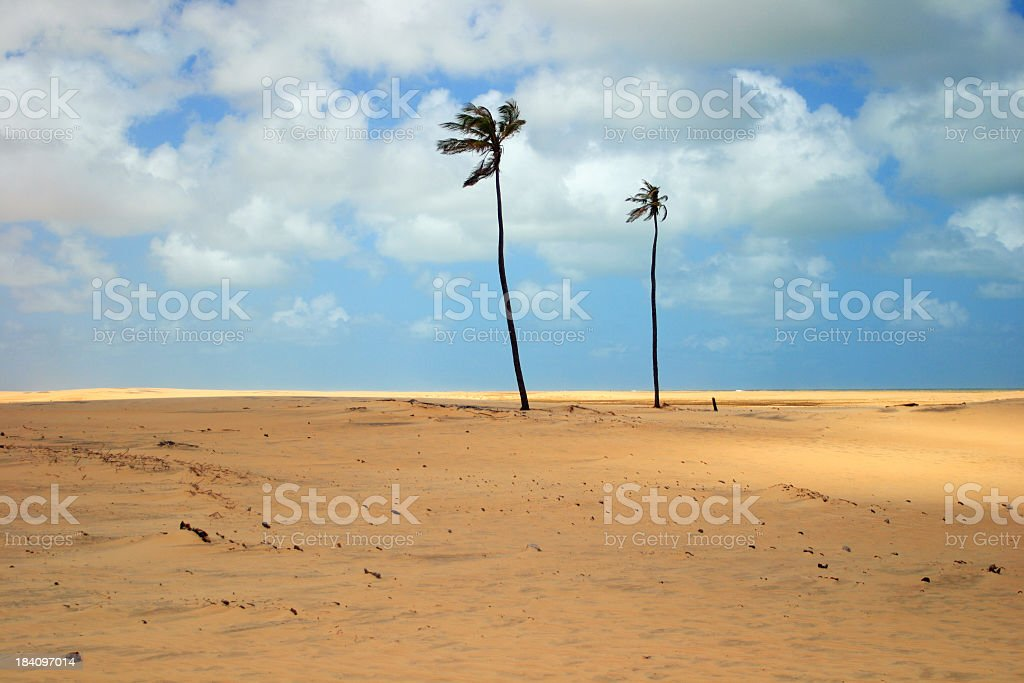Dunes & Coconut trees at the beach (Brazil) royalty-free stock photo