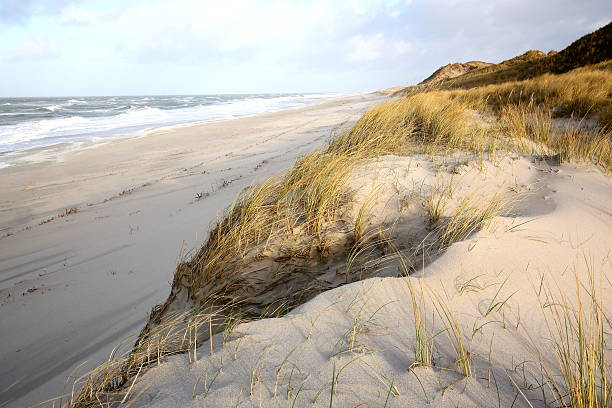 dünen und strand der insel sylt - sylt urlaub stock-fotos und bilder