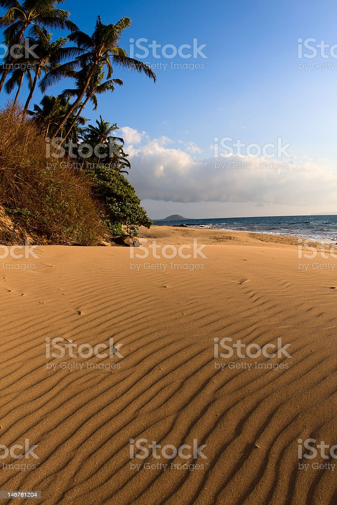 Dunes and Palm Trees stock photo