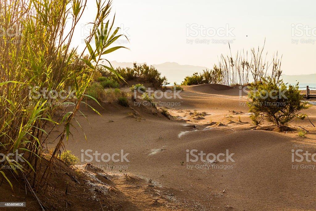 Dunes at sunset on the river Ebro delta. stock photo