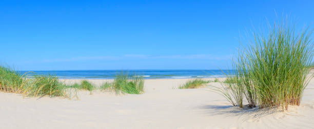 Dunes at the beach with Beachgrass during a beautiful summer day at the North Sea coast