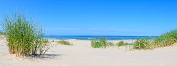 Dunes at the beach with Beachgrass during a beautiful summer day stock photo