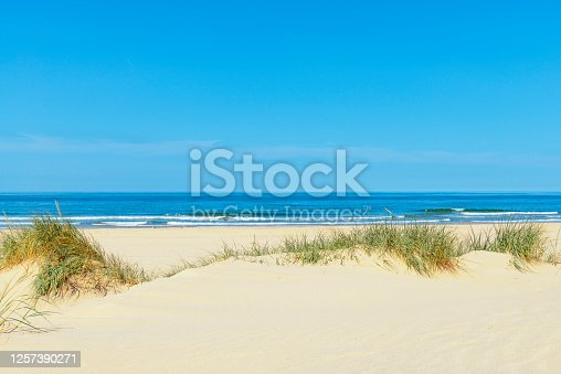 istock Dunes at the beach with beachgrass during a beautiful summer day 1257390271