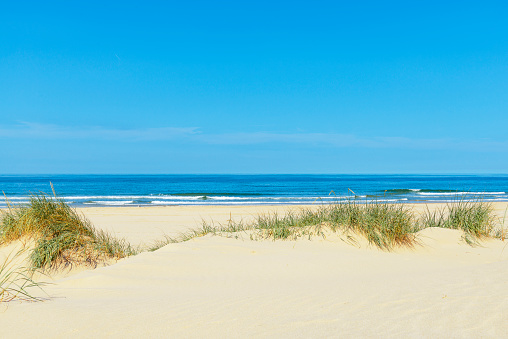 Dunes at the beach with beachgrass during a beautiful summer day
