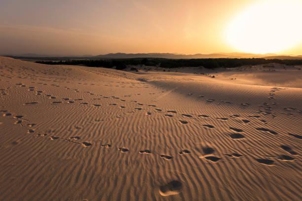 Dunes beach stock photo