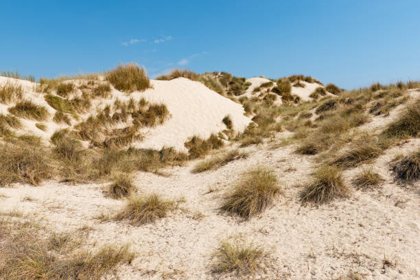 Dunes in Cala Mesquida on Mallorca island in Spain.