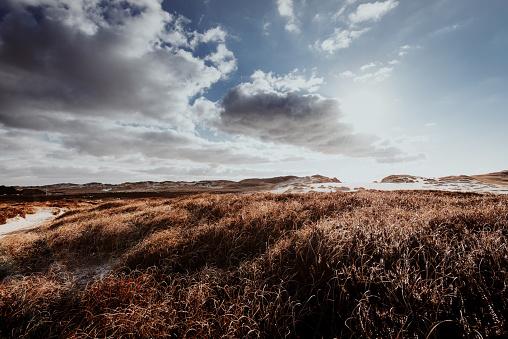 Dunes in winter
