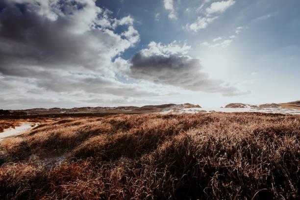 Dünen im winter – Foto