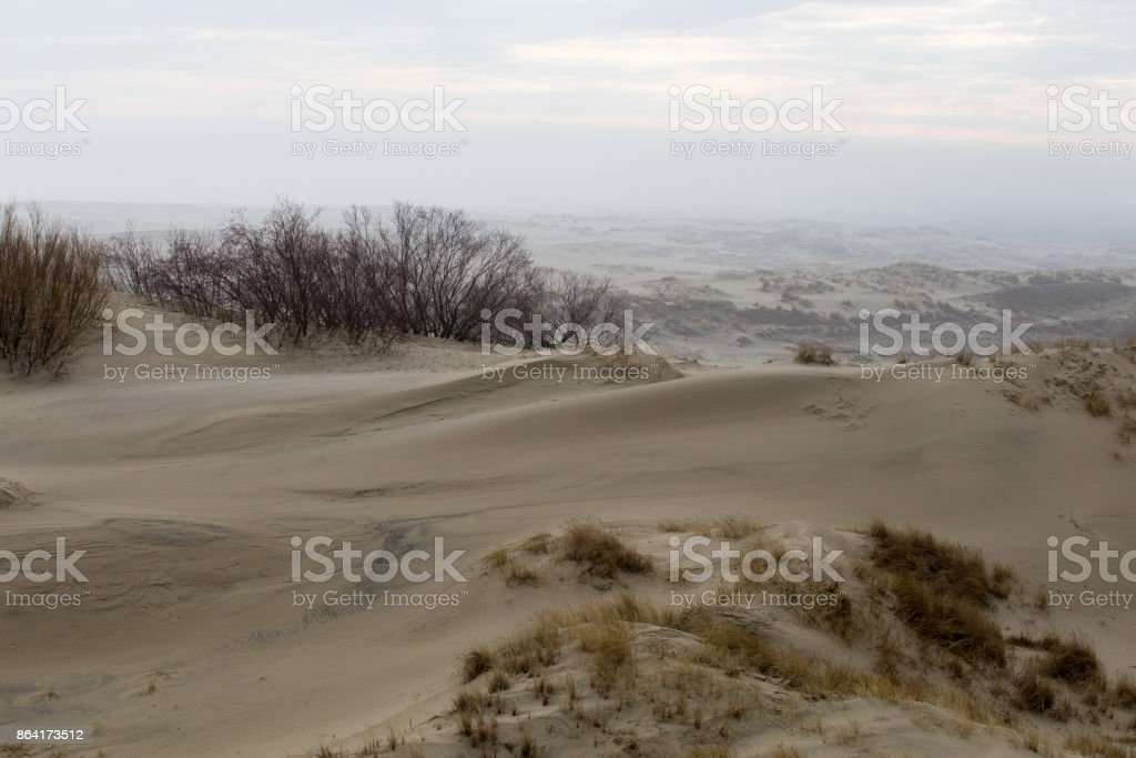 dunes of the Curonian Spit, reserve of Russia royalty-free stock photo