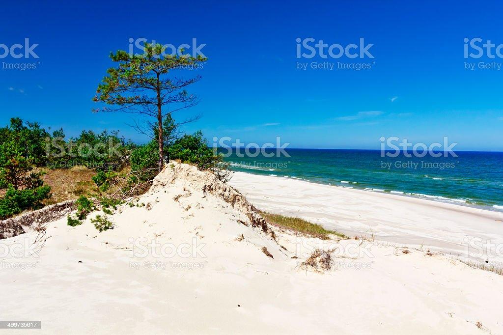 Dunes on the coast of Baltic Sea royalty-free stock photo