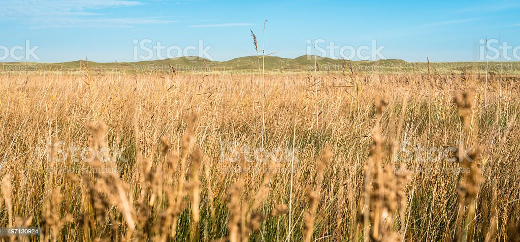 Dunes on the island Texel, National Park The Netherlands stock photo