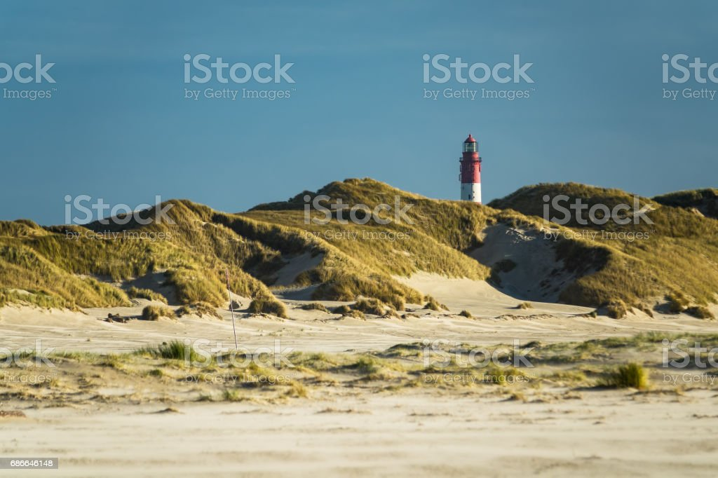 Dunes on the North Sea coast on the island Amrum, Germany foto de stock libre de derechos
