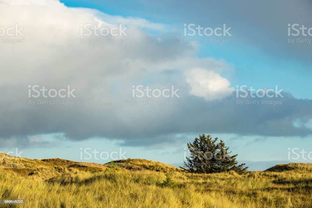 Dunes on the North Sea coast on the island Amrum, Germany royalty-free stock photo