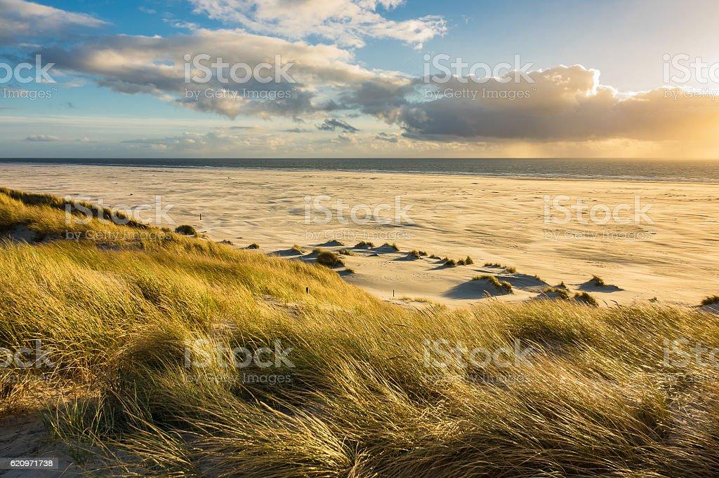 Dunes on the North Sea coast on the island Amrum – Foto