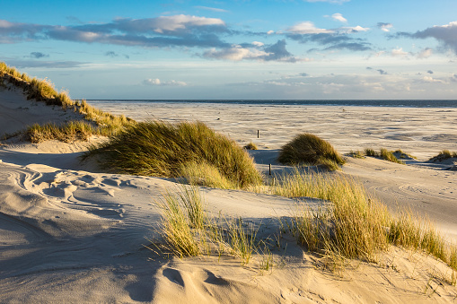 Dunes on the North Sea coast on the island Amrum