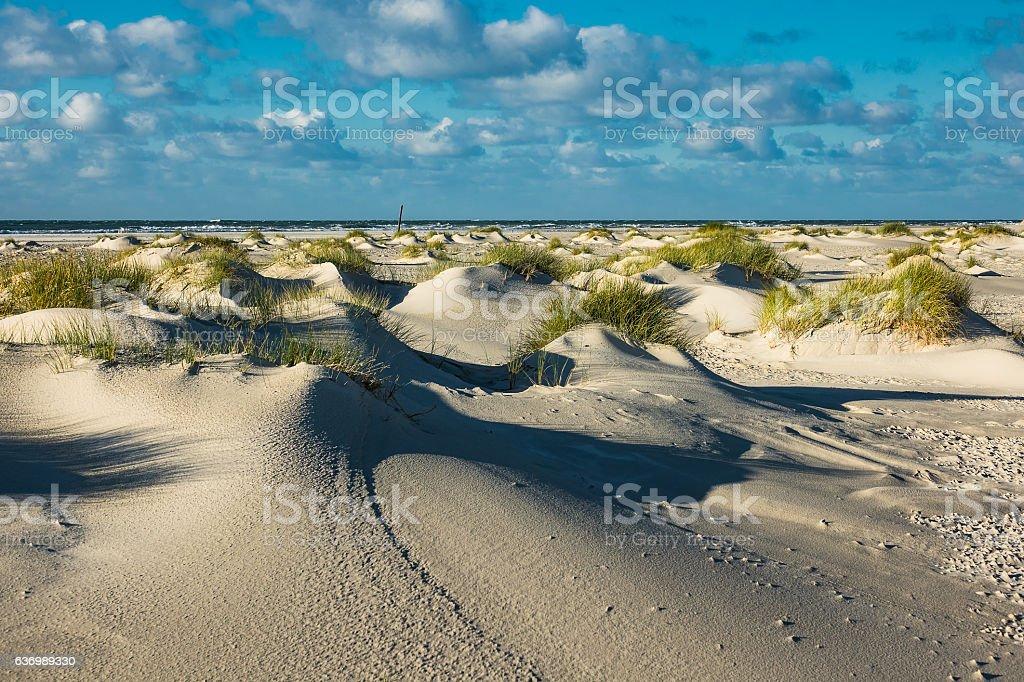 Dunes on the North Sea island Amrum, Germany – Foto