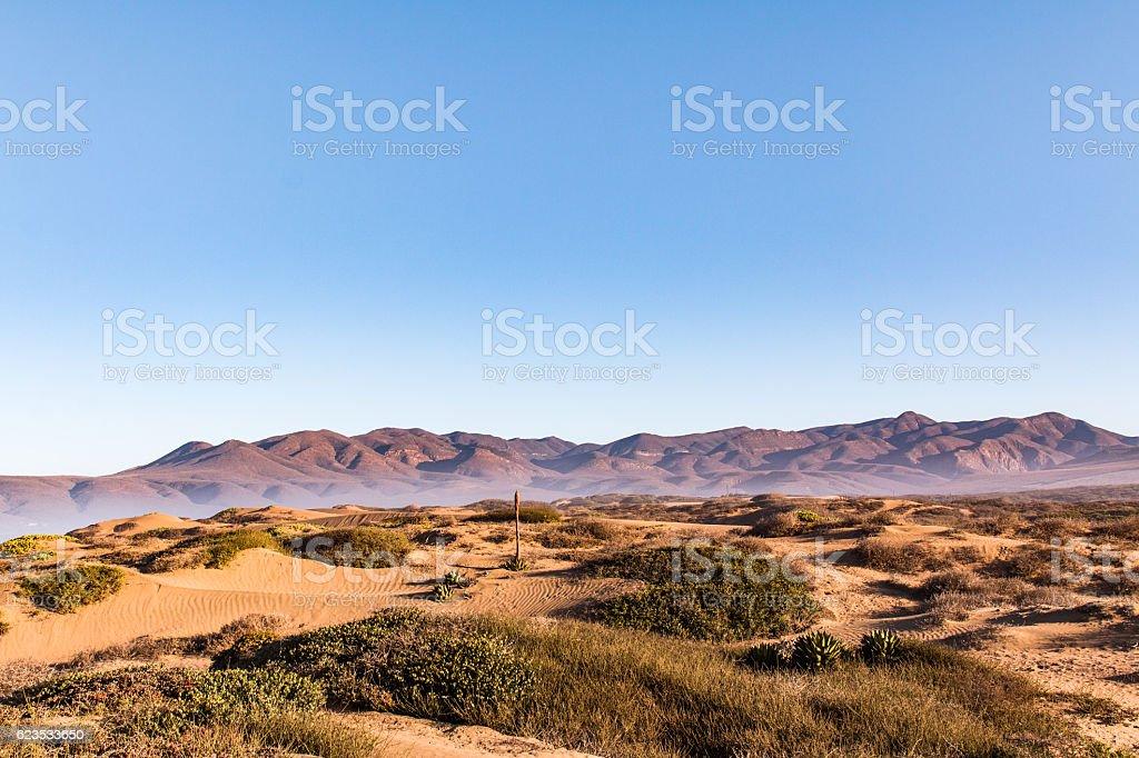 dunes - foto de stock