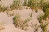 Dunes with beach grass at the Baltic Sea