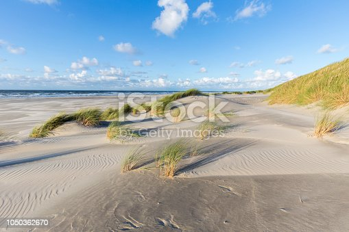 Sand an marram waving in afternoon sun. Dunes and beach of Terschelling, Netherlands