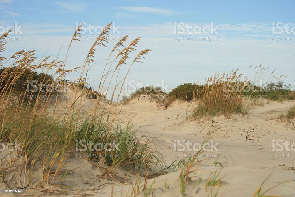 Dunes with Sea Grass stock photo