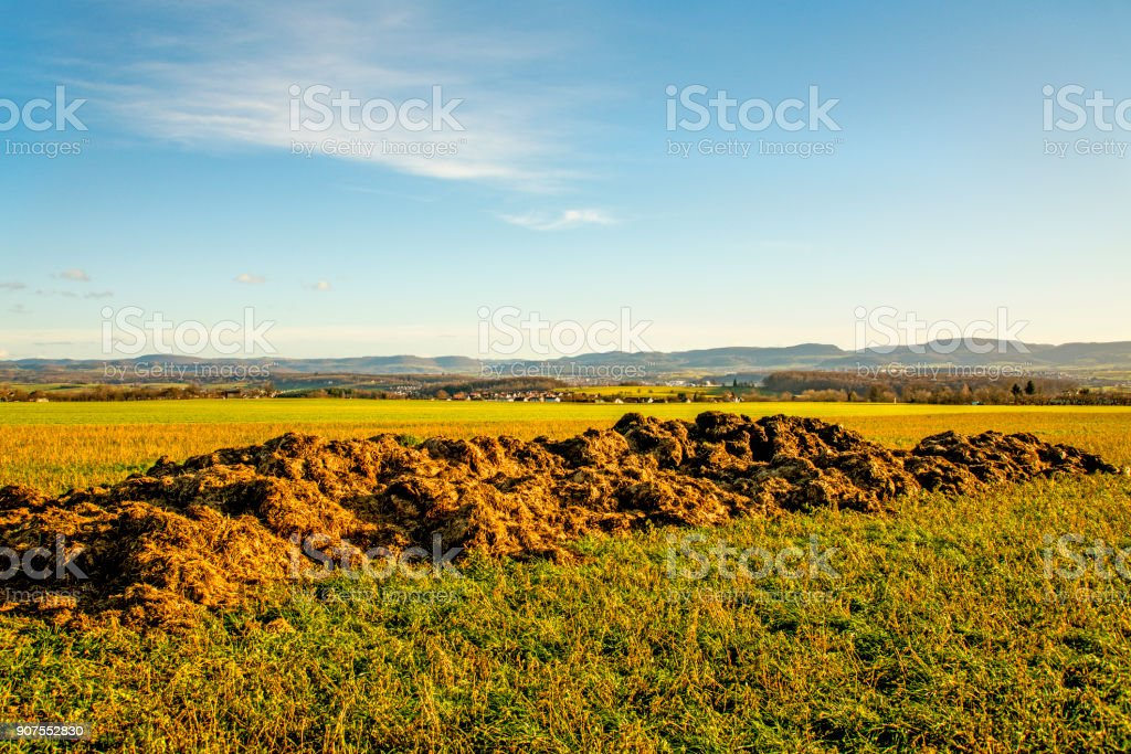dung hill in a meadow stock photo