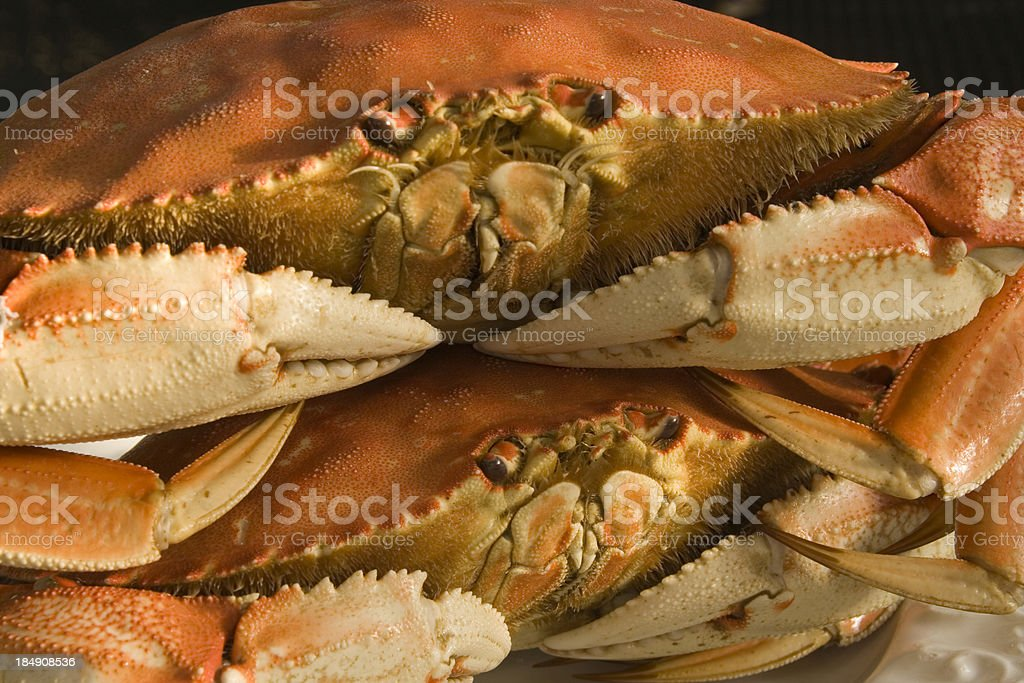 Dungeness Crab Dinner royalty-free stock photo