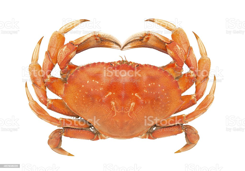 Dungeness Crab - Royalty-free Animal Shell Stock Photo