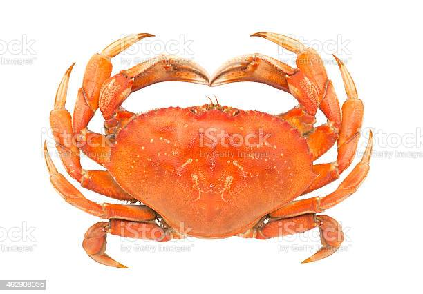 Dungeness Crab Stock Photo - Download Image Now