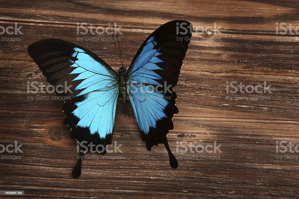Dunk Island Butterfly on Wood stock photo