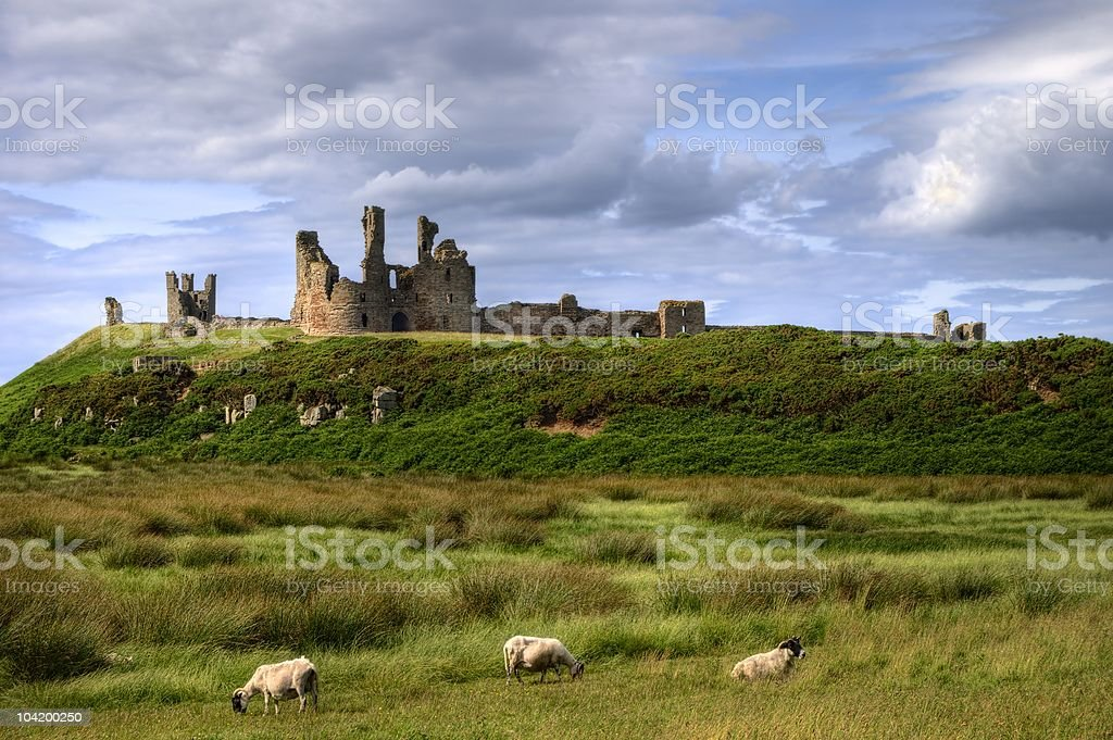 Dunstanburgh Castle and grazing sheep stock photo