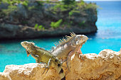 An iguana sits in front of a colonial building in Florida