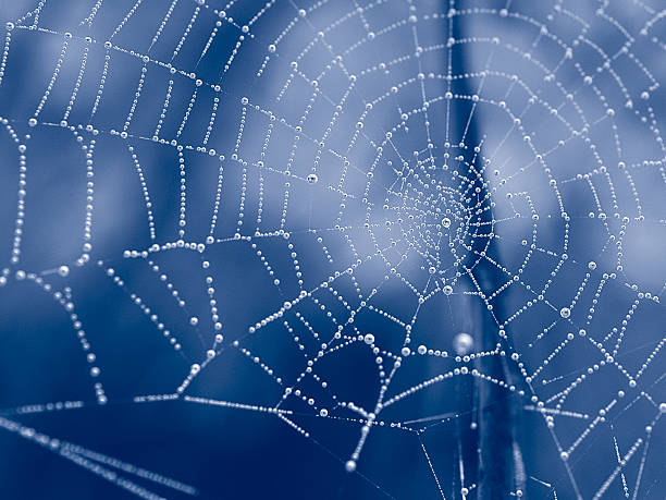duotone web - spider web stock photos and pictures