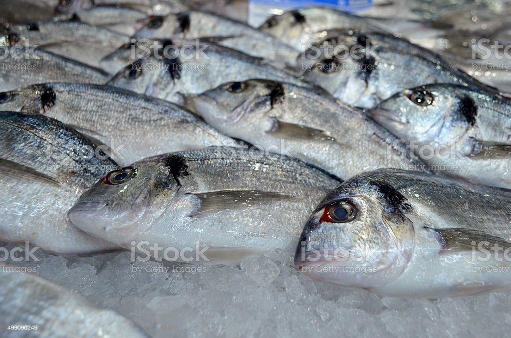 Durada Fish For Sale At Market Stock Photo Istock