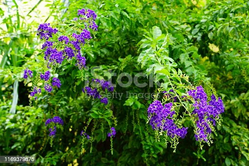 Flowerbed, Plant, Thailand, Beauty In Nature, Blossom