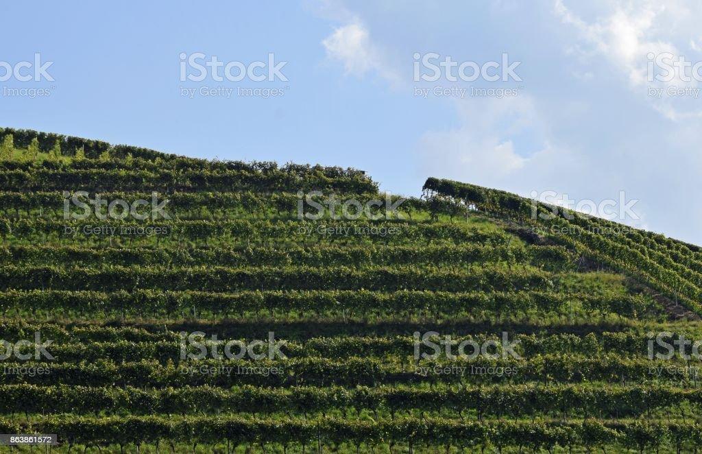 Durbach Vineyard stock photo