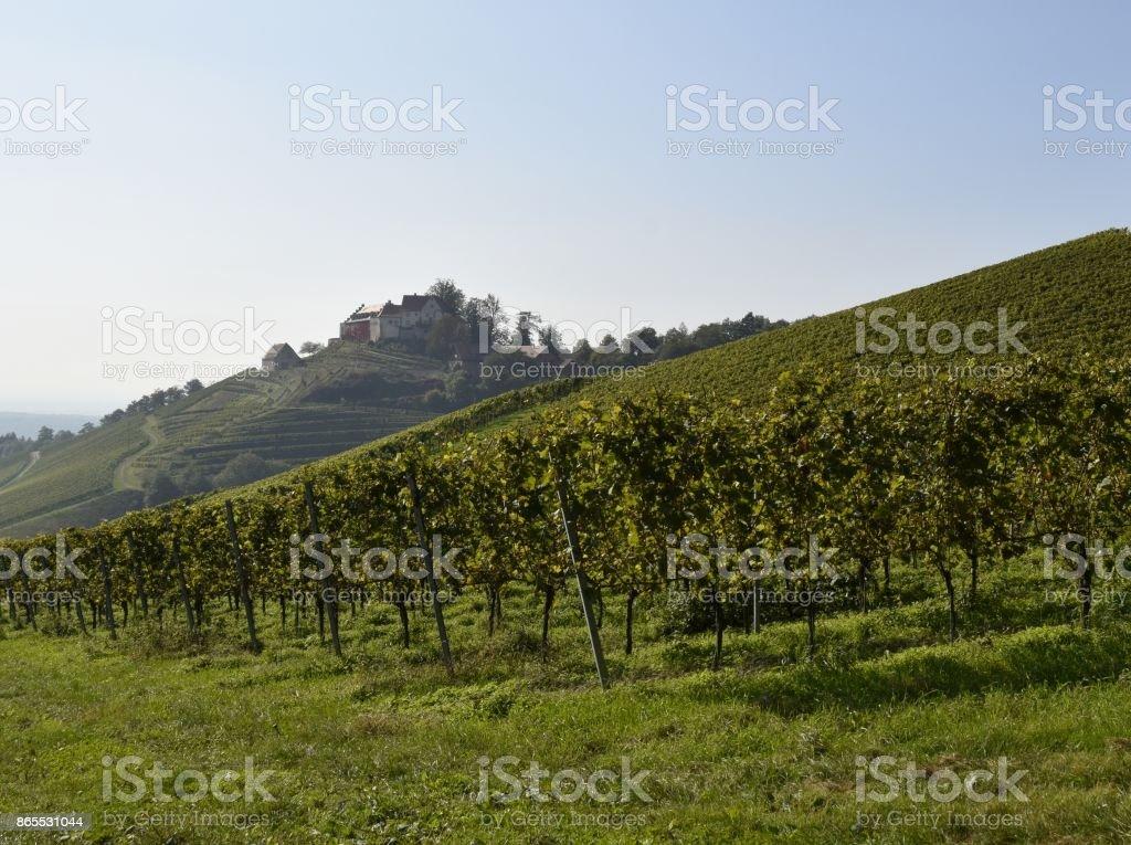 Durbach vineyards stock photo
