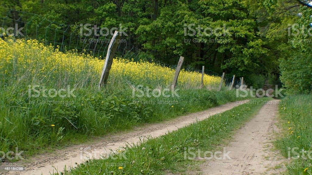 Durch Zaun abgetrenntes blühendes Rapsfeld am Wald und Feldwegrand stock photo