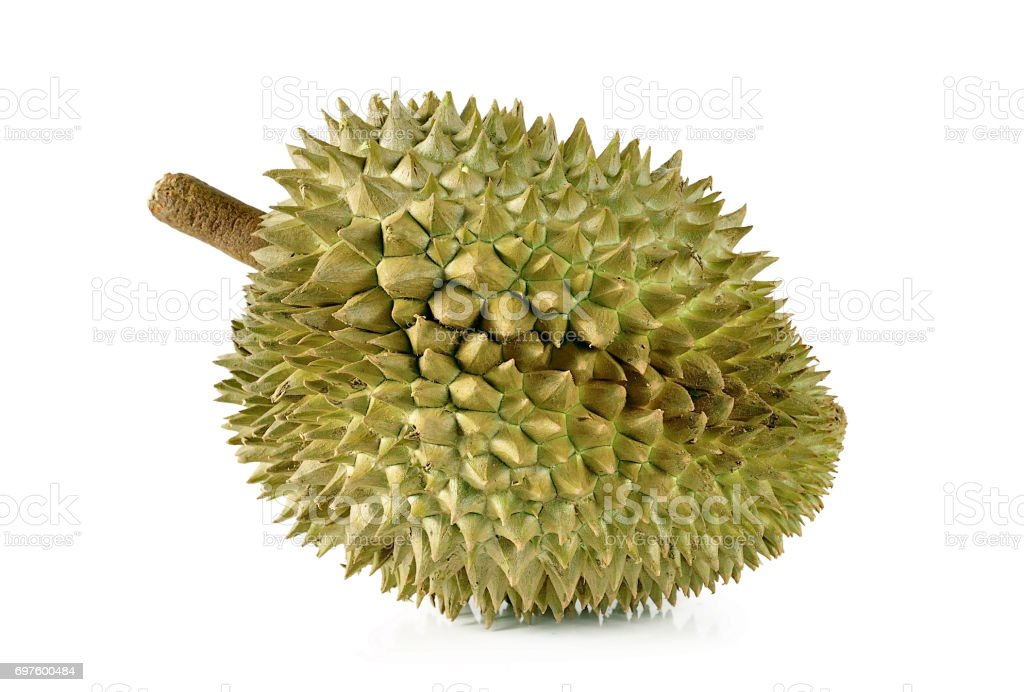 durian close up isolated on white background. stock photo