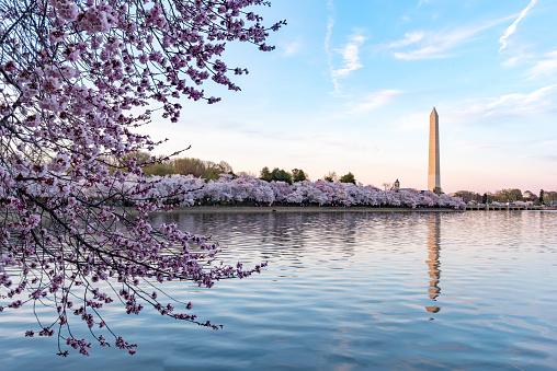 Washington DC,USA.