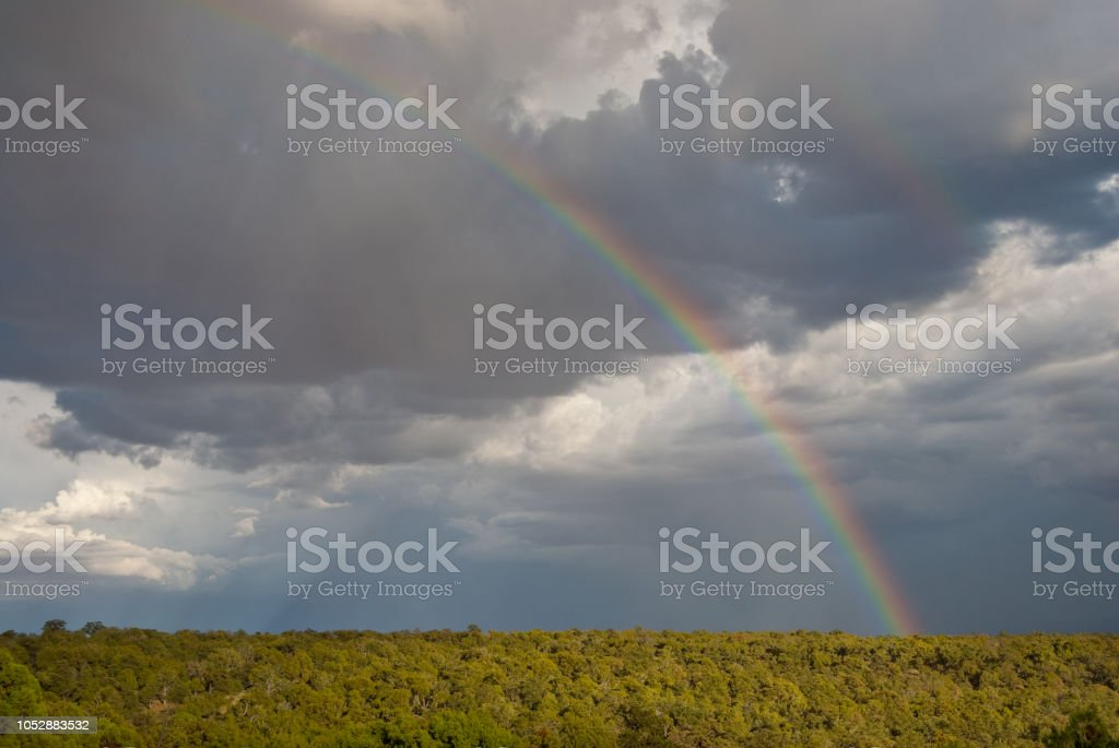 Rainbow Over a Juniper Forest stock photo