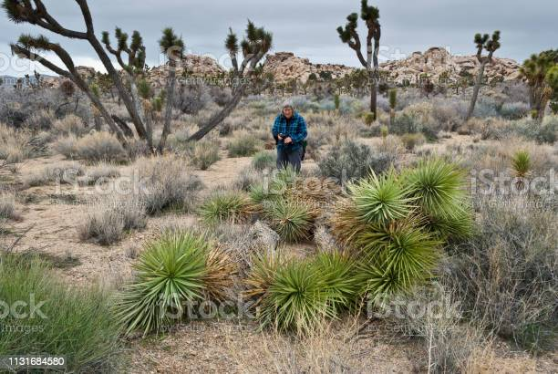 Woman Viewing Vandalized Joshua Trees Stock Photo - Download Image Now
