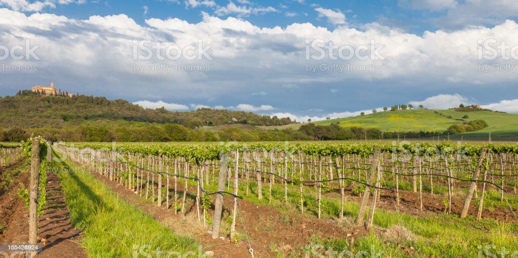 Dusk at Tuscany vineyards royalty-free stock photo