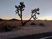 In between joshua tree national park and las Vegas. Dusk in the high desert.