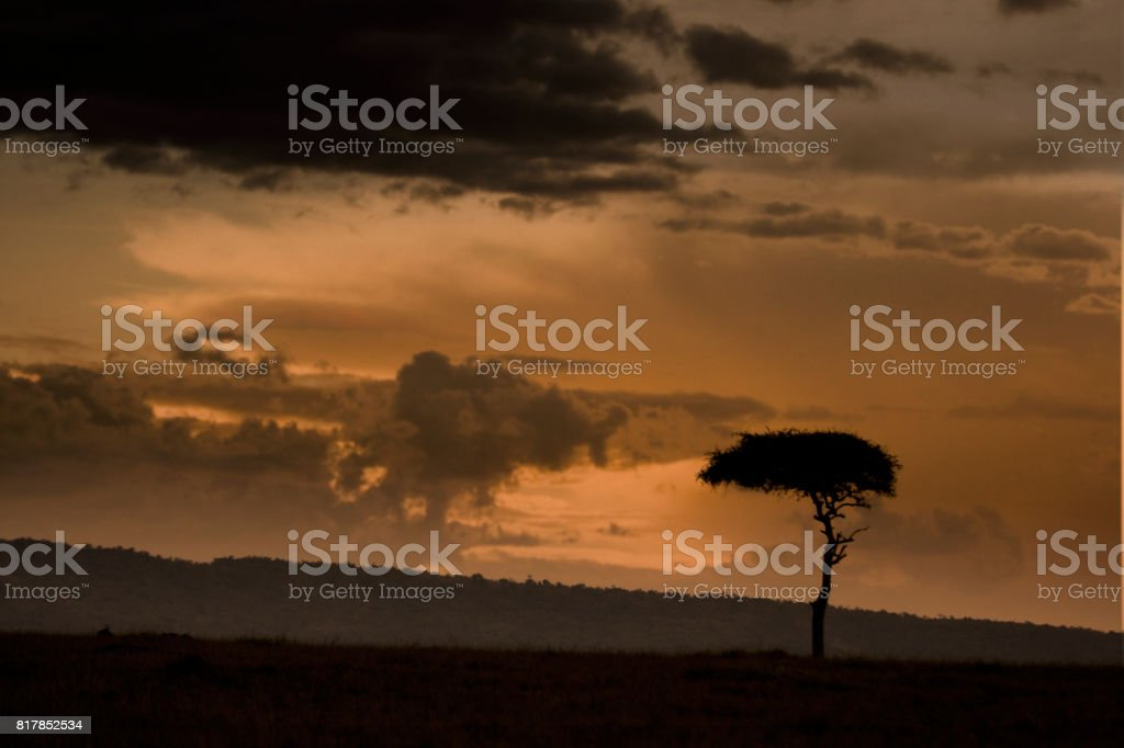 Dusk in the Masai Mara stock photo