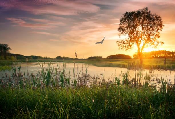 dusk over river - пруд стоковые фото и изображения