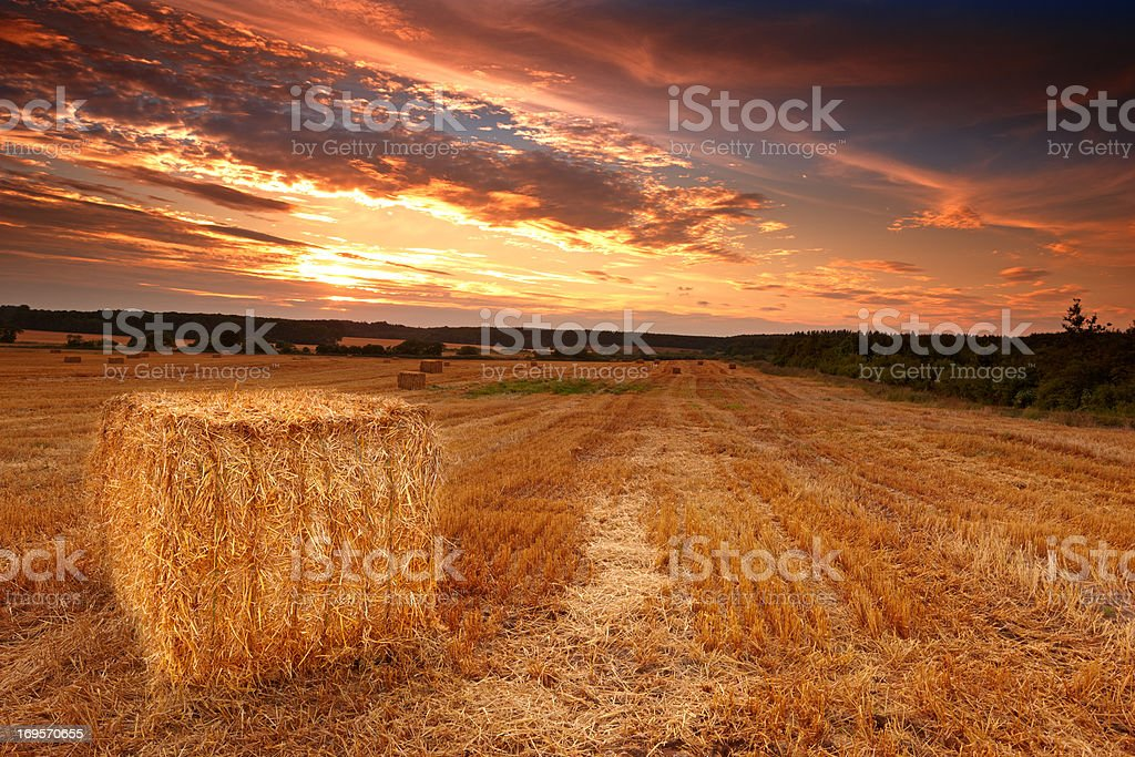 Dusk over the harvest stock photo