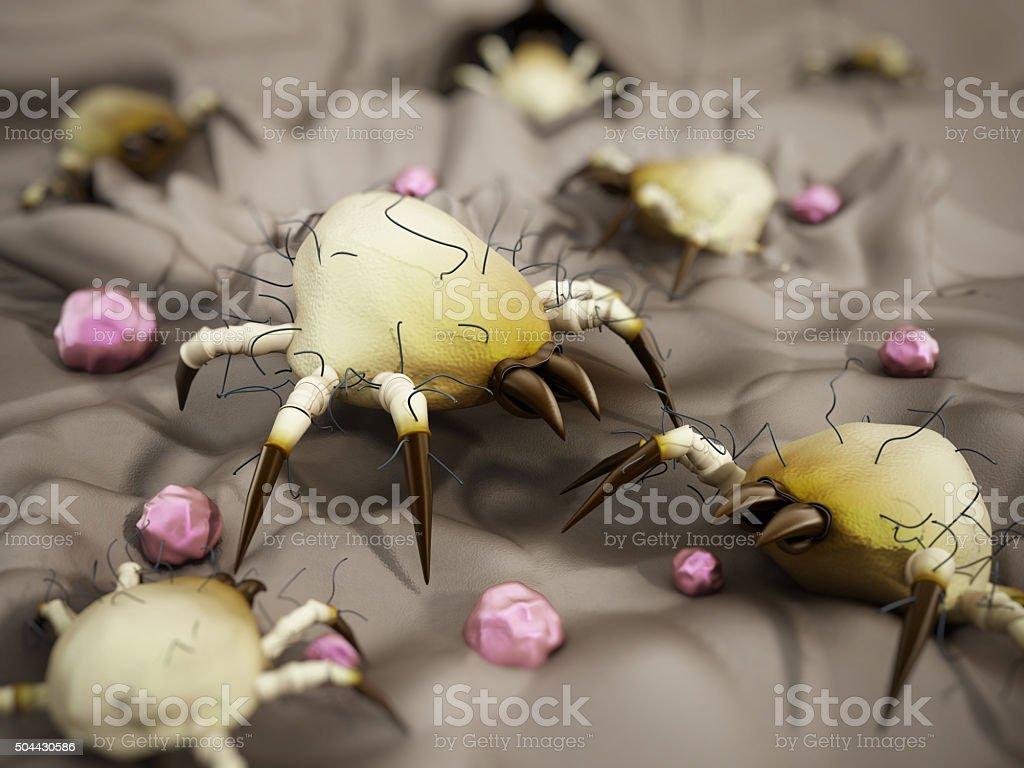 Dust mite stock photo